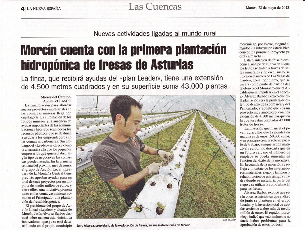 Plantación de fresas en Morcín